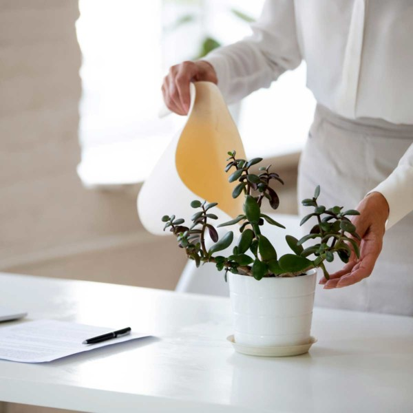 Image of someone watering a plant