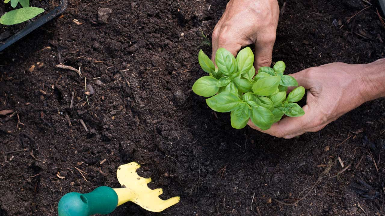 Image of someone planting something.